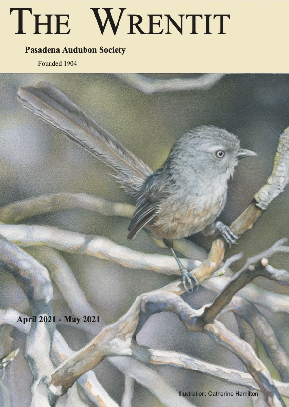 April - May 2021 Wrentit newsletter cover